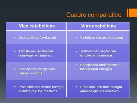Anabolismo Y Catabolismo Diferencias Ejemplos Cuadro Comparativo